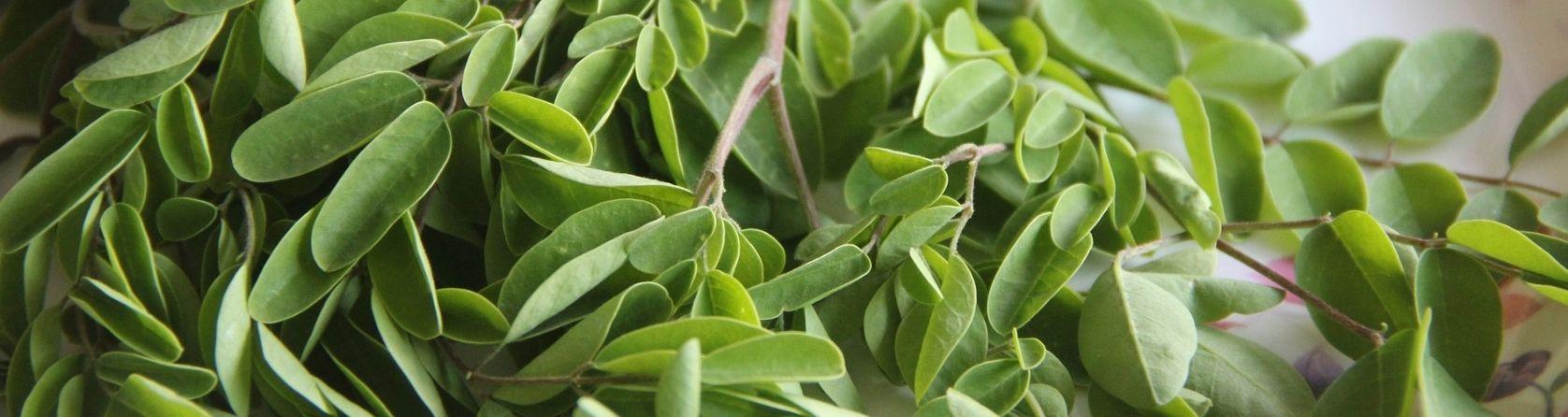 moringa-a-niski-poziom-cukru